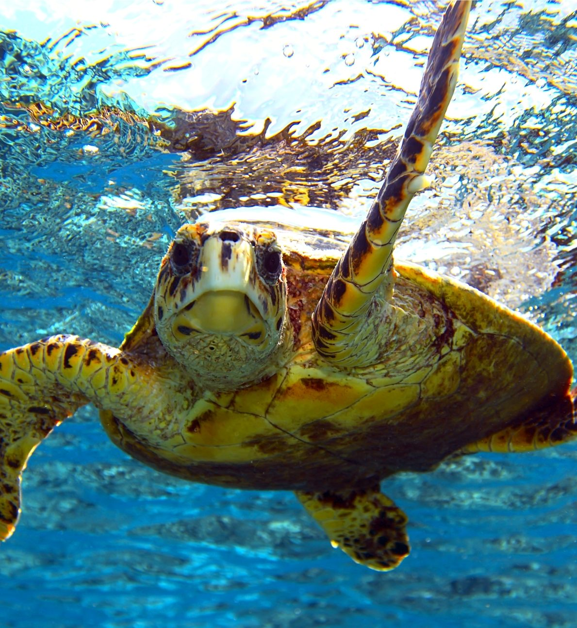 Protect the Ocean - sea turtle